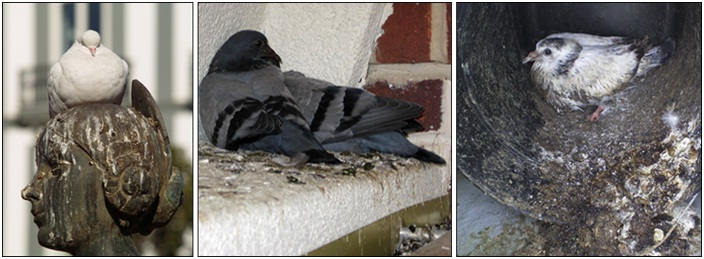bird control toronto pigeon control property managers, commercial, residential